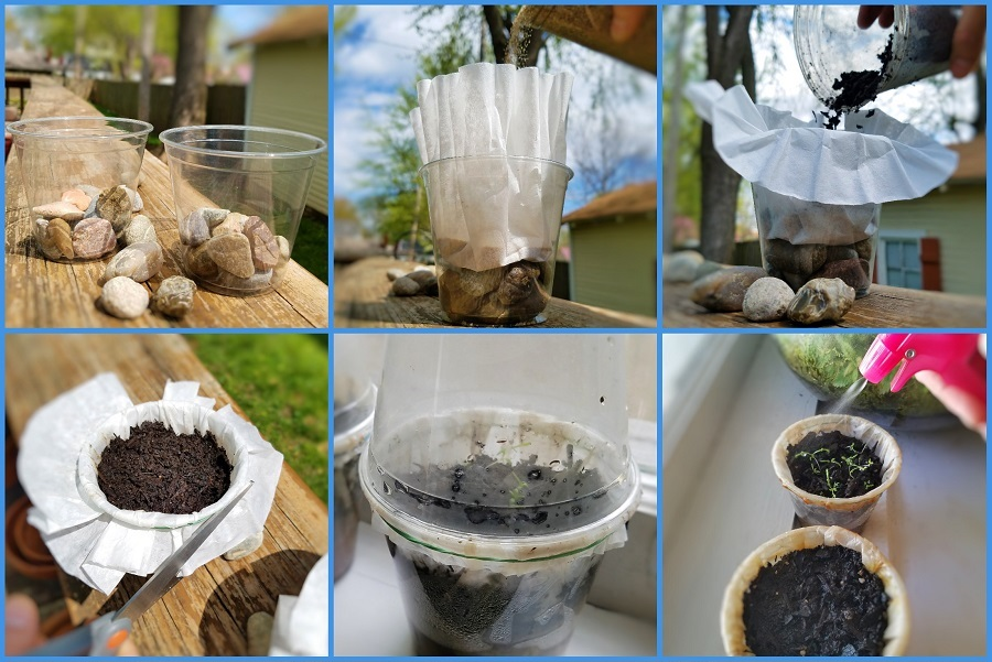 Build Your Own Terrarium and Monitor Water Quality